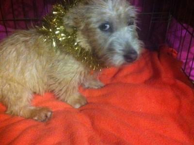 charlie glen pup