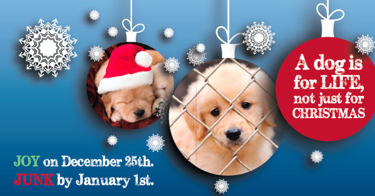 Please Don't Buy a Puppy this Christmas - DAWG