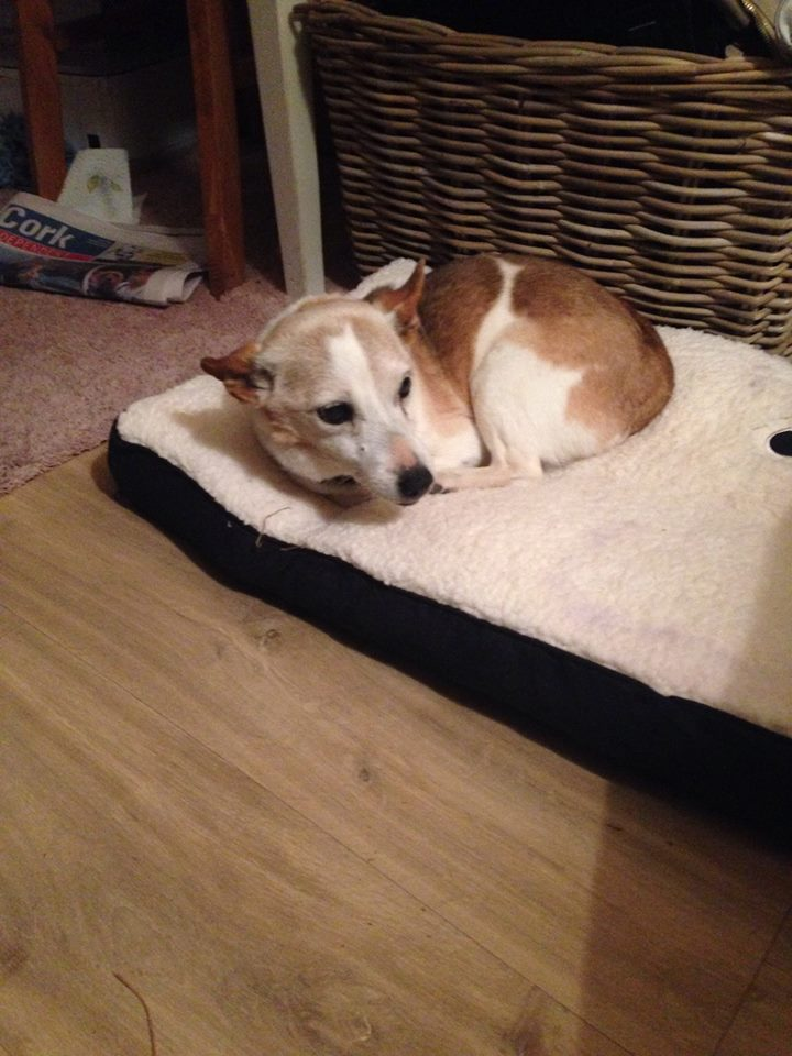 Ivy The Terrier X Needs A New Home Dawg