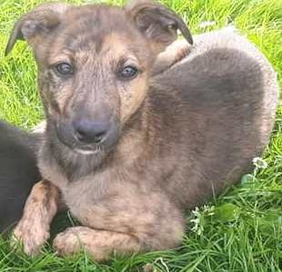 Dogs for Adoption from Cork DAWG