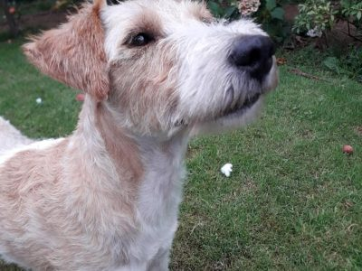 DAWG: Cork Dog Action Welfare Group